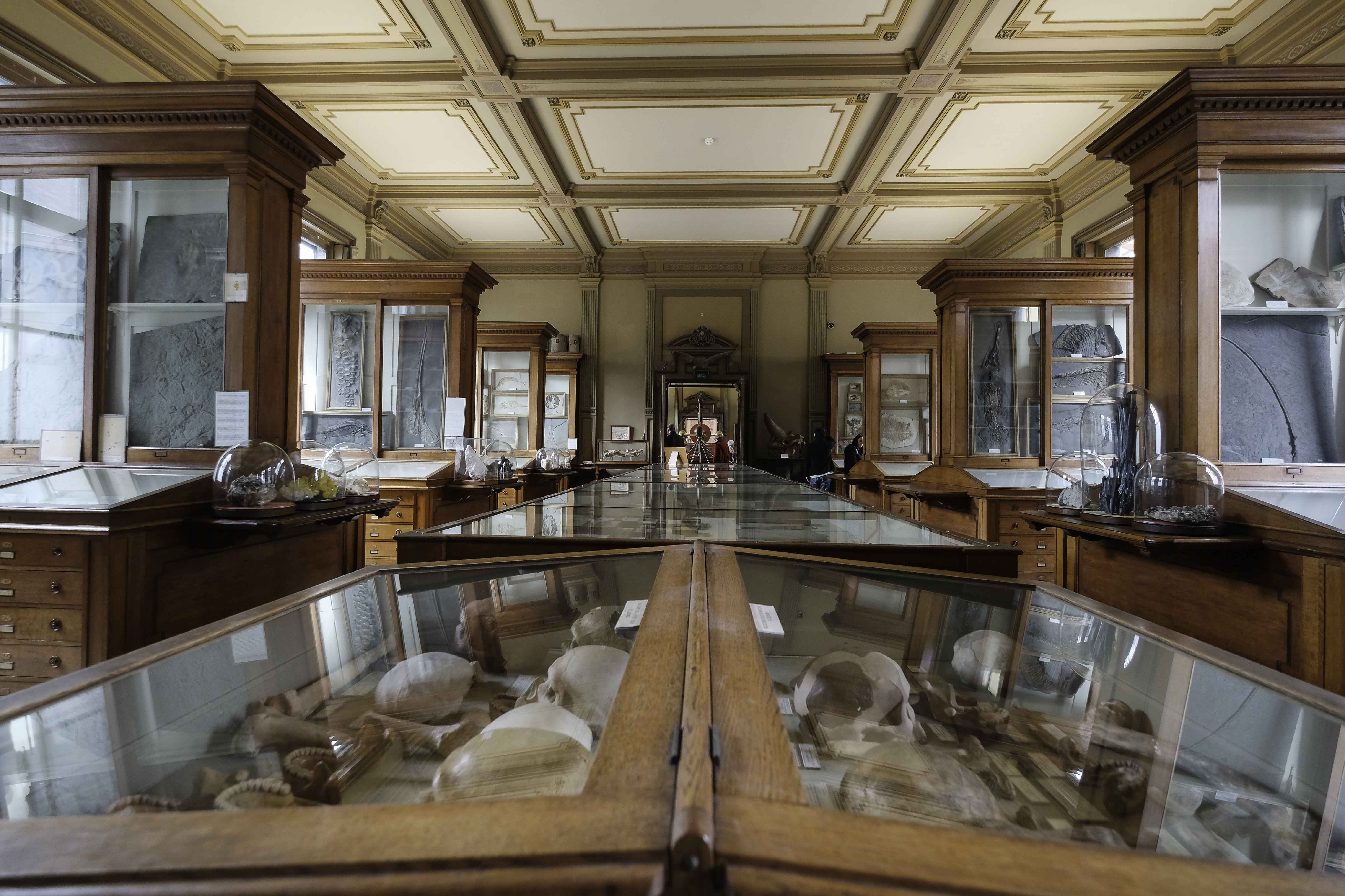 display-case-with-fossils-in-the-teylers-museum