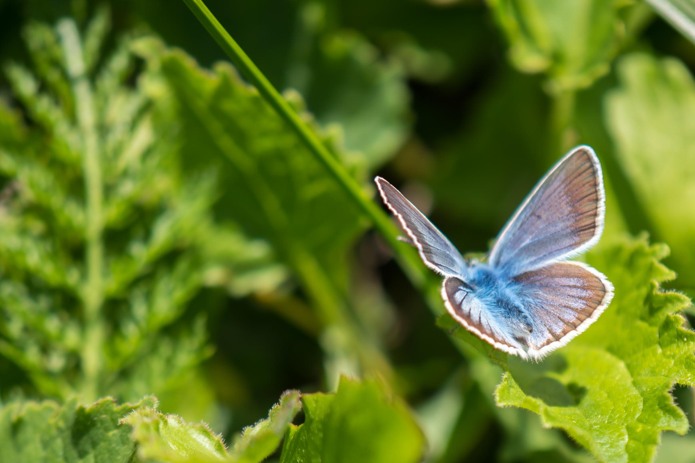 vlinder-roelof-2
